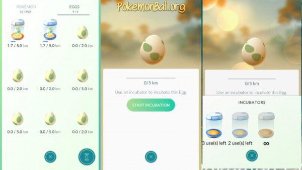 Вставлення яйця в інкубатор